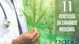 11 benefícios da cannabis medicinal
