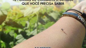 10 formas de combater dengue que você precisa saber