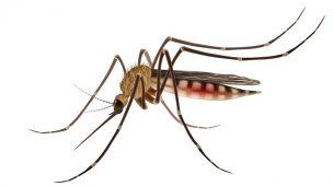 Plano de saúde cobre dengue: saiba as novidades do Rol da ANS